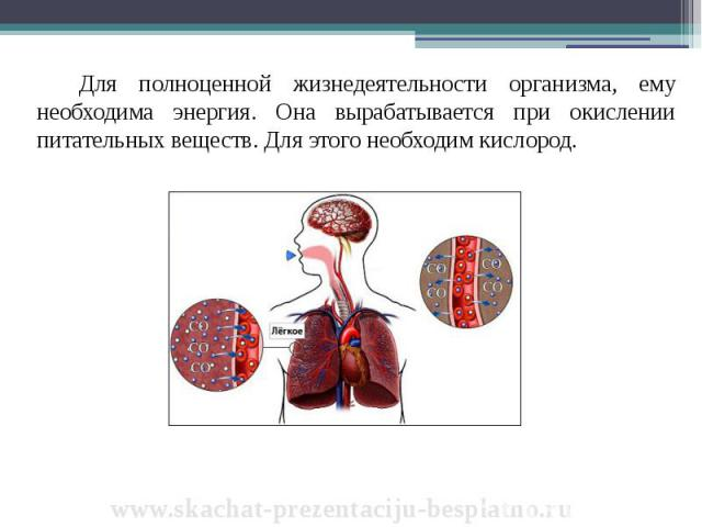 Для полноценной жизнедеятельности организма, ему необходима энергия. Она вырабатывается при окислении питательных веществ. Для этого необходим кислород. Для полноценной жизнедеятельности организма, ему необходима энергия. Она вырабатывается при окис…