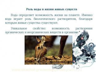Роль воды в жизни живых существ Роль воды в жизни живых существ Вода определяет