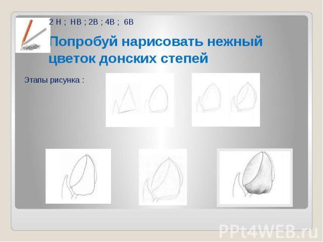Попробуй нарисовать нежный цветок донских степей