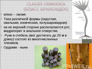 кrinon – лилия кrinon – лилия Тека различной формы (округлая, овальная, коническ