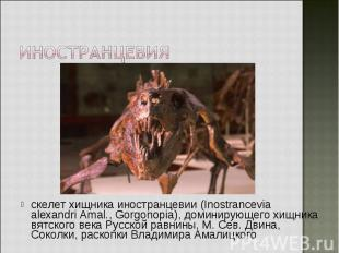 скелет хищника иностранцевии (Inostrancevia alexandri Amal., Gorgonopia), домини