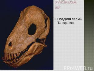 Поздняя пермь, Татарстан Поздняя пермь, Татарстан