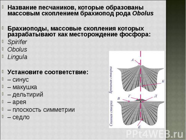 Название песчаников, которые образованы массовым скоплением брахиопод рода Obolus Название песчаников, которые образованы массовым скоплением брахиопод рода Obolus Брахиоподы, массовые скопления которых разрабатывают как месторождение фосфора: Spiri…