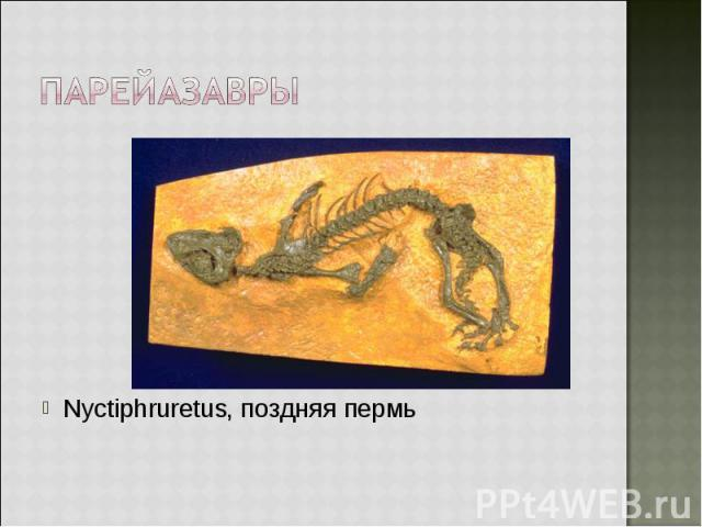 Nyctiphruretus, поздняя пермь Nyctiphruretus, поздняя пермь