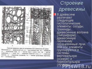 В древесине различают следующие гистологические элементы: сосуды, трахеиды, древ