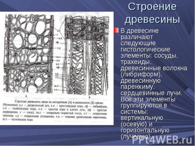 В древесине различают следующие гистологические элементы: сосуды, трахеиды, древесинные волокна (либриформ), древесинную паренхиму, сердцевинные лучи. Все эти элементы группируются в системы: вертикальную (осевую) и горизонтальную (лучевую). В древе…
