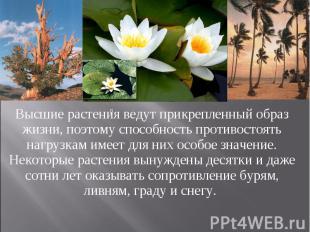 Высшие растения ведут прикрепленный образ жизни, поэтому способность противостоя