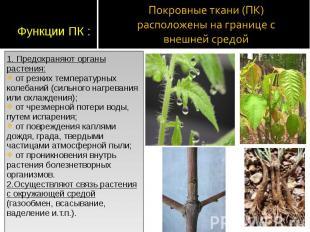 1. Предохраняют органы растения: 1. Предохраняют органы растения: от резких темп