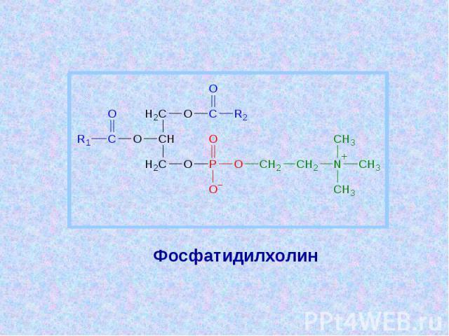 Фосфатидилхолин Фосфатидилхолин