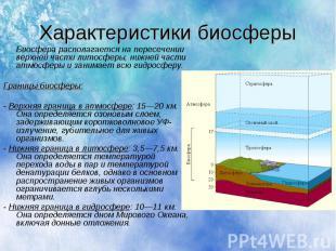 Характеристики биосферы Биосфера располагается на пересечении верхней части лито