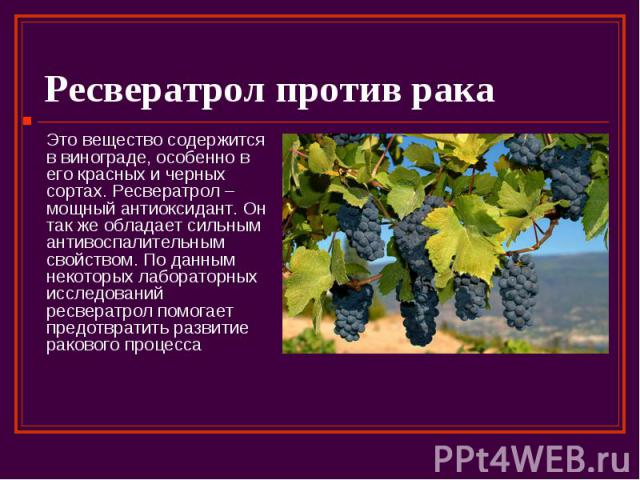 Ресвератрол против рака Это вещество содержится в винограде, особенно в его красных и черных сортах. Ресвератрол – мощный антиоксидант. Он так же обладает сильным антивоспалительным свойством. По данным некоторых лабораторных исследований ресвератро…