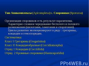 Тип Апикомплексы (Apicomplexa) s. Споровики (Sporozoa) Тип Апикомплексы (Apicomp