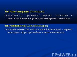 Тип Асцетоспоридии (Ascetospora) Тип Асцетоспоридии (Ascetospora) Паразитические