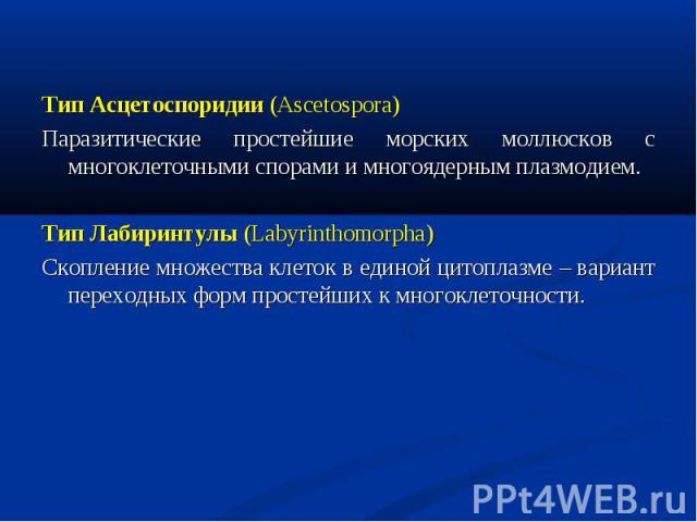 Тип Асцетоспоридии (Ascetospora) Тип Асцетоспоридии (Ascetospora) Паразитические простейшие морских моллюсков с многоклеточными спорами и многоядерным плазмодием. Тип Лабиринтулы (Labyrinthomorpha) Скопление множества клеток в единой цитоплазме – ва…