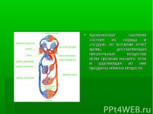 Кровеносная система состоит из сердца и сосудов, по которым течет кровь, доставл