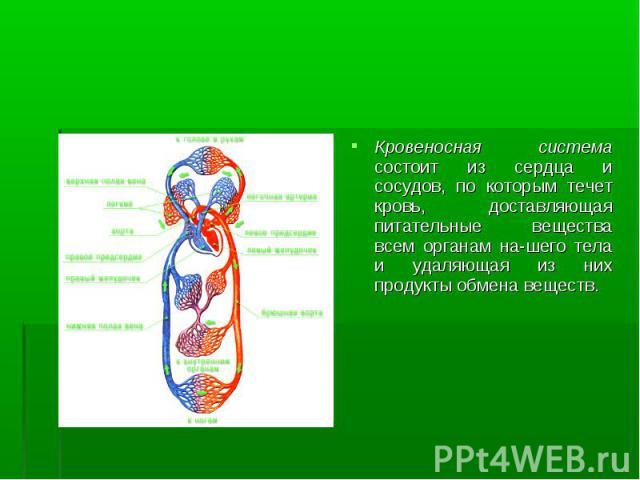 Кровеносная система состоит из сердца и сосудов, по которым течет кровь, доставляющая питательные вещества всем органам нашего тела и удаляющая из них продукты обмена веществ. Кровеносная система состоит из сердца и сосудов, по которым течет кр…