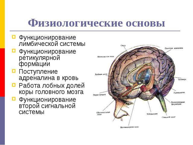 Физиологические основы Функционирование лимбической системы Функционирование ретикулярной формации Поступление адреналина в кровь Работа лобных долей коры головного мозга Функционирование второй сигнальной системы