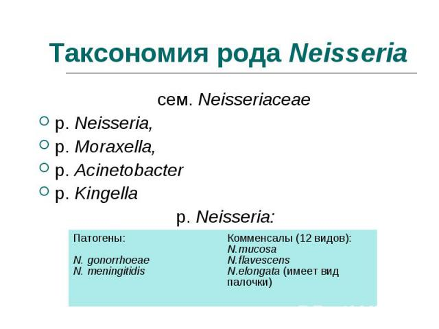 сем. Neisseriaceae сем. Neisseriaceae р. Neisseria, р. Moraxella, р. Acinetobacter р. Kingella р. Neisseria: