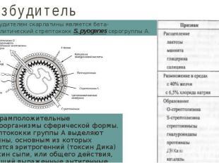 Возбудитель Возбудителем скарлатины является бета-гемолитический стрептококк S.