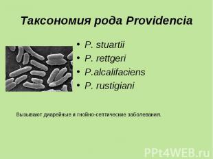 P. stuartii P. stuartii P. rettgeri P.alcalifaciens P. rustigiani