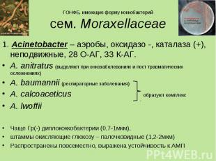 1. Acinetobacter – аэробы, оксидазо -, каталаза (+), неподвижные, 28 О-АГ, 33 К-