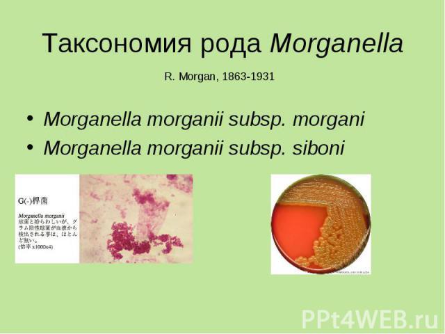 Morganella morganii subsp. morgani Morganella morganii subsp. morgani Morganella morganii subsp. siboni
