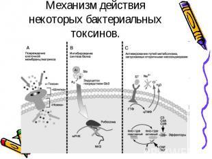 Механизм действия некоторых бактериальных токсинов.