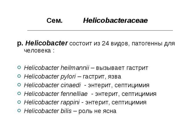 Сем. Helicobacteraceae Сем. Helicobacteraceae p. Helicobacter состоит из 24 видов, патогенны для человека : Helicobacter heilmannii – вызывает гастрит Helicobacter pylori – гастрит, язва Helicobacter cinaedi - энтерит, септицимия Helicobacter fennel…