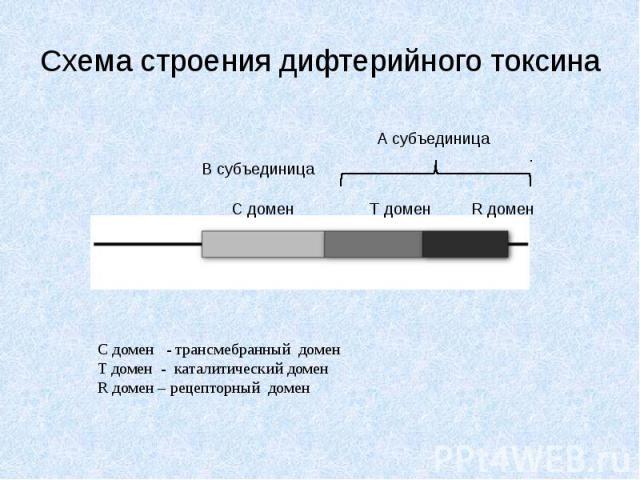 Схема строения дифтерийного токсина