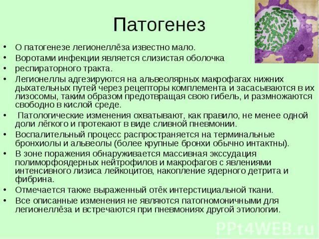 Патогенез О патогенезе легионеллёза известно мало. Воротами инфекции является слизистая оболочка респираторного тракта. Легионеллы адгезируются на альвеолярных макрофагах нижних дыхательных путей через рецепторы комплемента и засасываются в их лизос…