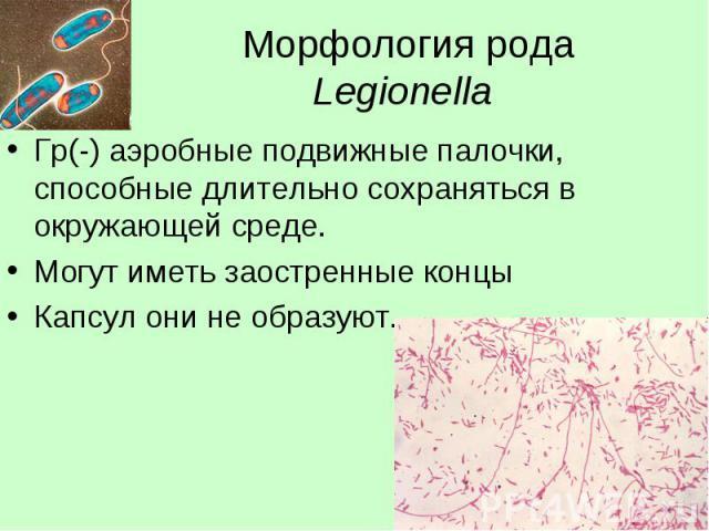 Морфология рода Legionella Гр(-) аэробные подвижные палочки, способные длительно сохраняться в окружающей среде. Могут иметь заостренные концы Капсул они не образуют.