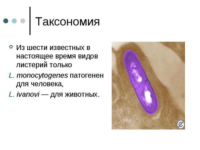 Таксономия Из шести известных в настоящее время видов листерий только L. monocytogenes патогенен для человека, L. ivanovi— для животных.