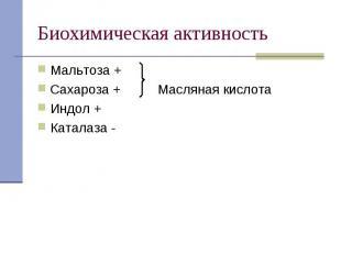 Мальтоза + Мальтоза + Сахароза + Масляная кислота Индол + Каталаза -