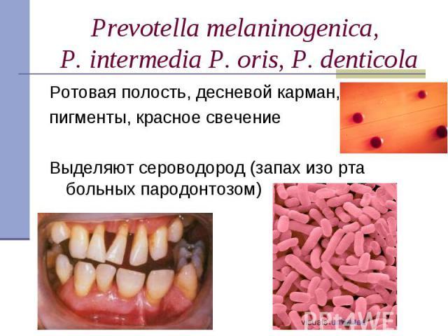 Ротовая полость, десневой карман, Ротовая полость, десневой карман, пигменты, красное свечение Выделяют сероводород (запах изо рта больных пародонтозом)