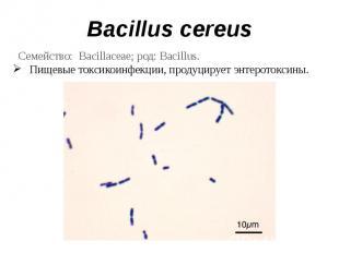 Bacillus cereus Семейство: Bacillaceae; род: Bacillus.