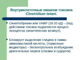Синаптобревин или VAMP (18-20 кД) – (под действием токсина подавляется процесс э