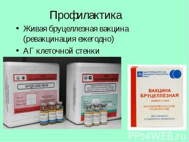 Живая бруцеллезная вакцина (ревакцинация ежегодно) Живая бруцеллезная вакцина (ревакцинация ежегодно) АГ клеточной стенки