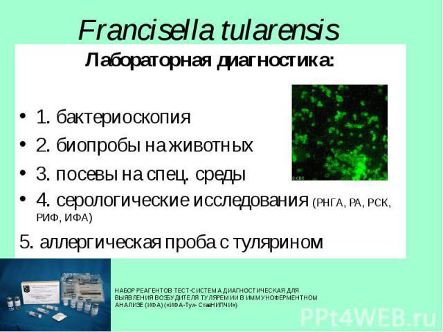 Лабораторная диагностика: Лабораторная диагностика: 1. бактериоскопия 2. биопробы на животных 3. посевы на спец. среды 4. серологические исследования (РНГА, РА, РСК, РИФ, ИФА) 5. аллергическая проба с тулярином