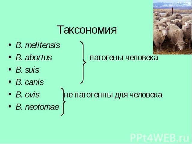 B. melitensis B. melitensis B. abortus патогены человека B. suis B. canis B. ovis не патогенны для человека B. neotomae