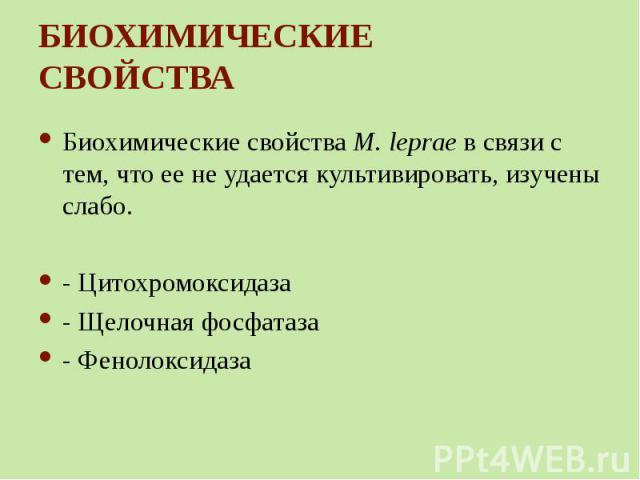 Биохимические свойства M. leprae в связи с тем, что ее не удается культивировать, изучены слабо. Биохимические свойства M. leprae в связи с тем, что ее не удается культивировать, изучены слабо. - Цитохромоксидаза - Щелочная фосфатаза - Фенолоксидаза