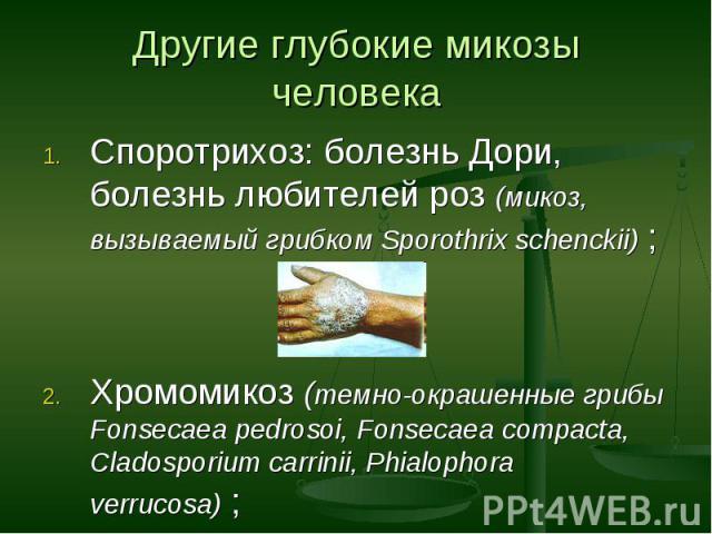 Споротрихоз: болезнь Дори, болезнь любителей роз (микоз, вызываемый грибком Sporothrix schenckii) ; Споротрихоз: болезнь Дори, болезнь любителей роз (микоз, вызываемый грибком Sporothrix schenckii) ; Хромомикоз (темно-окрашенные грибы Fonsecaea pedr…