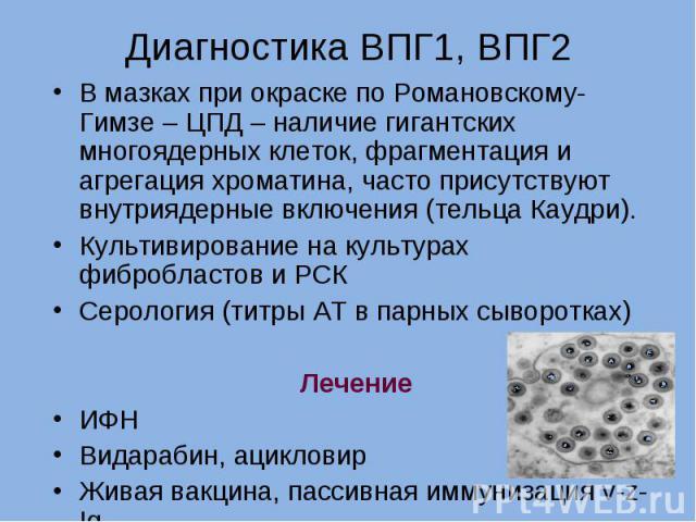 В мазках при окраске по Романовскому-Гимзе – ЦПД – наличие гигантских многоядерных клеток, фрагментация и агрегация хроматина, часто присутствуют внутриядерные включения (тельца Каудри). В мазках при окраске по Романовскому-Гимзе – ЦПД – наличие гиг…