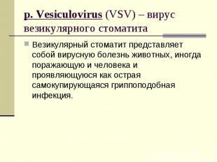 Везикулярный стоматит представляет собой вирусную болезнь животных, иногда пораж