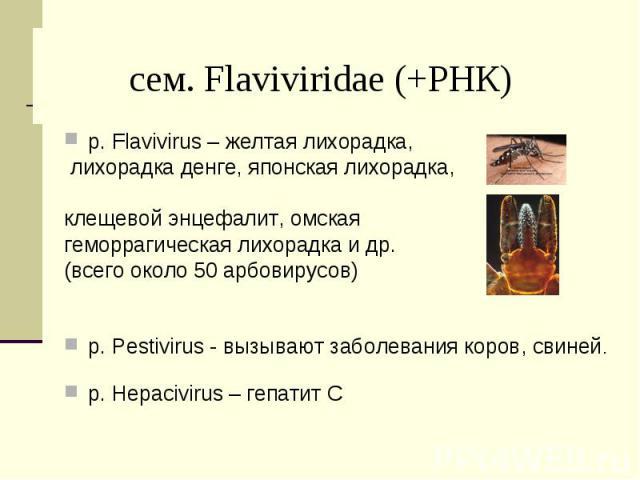 р. Flavivirus – желтая лихорадка, р. Flavivirus – желтая лихорадка, лихорадка денге, японская лихорадка, клещевой энцефалит, омская геморрагическая лихорадка и др. (всего около 50 арбовирусов) р. Pestivirus - вызывают заболевания коров, свиней. р. H…