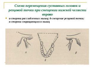 а-сторона расслабленных мышц; б-смещение резцовой точки; в-сторона сокращающихся