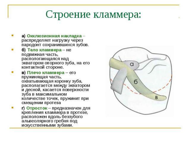 а) Окклюзионная накладка – распределяет нагрузку через пародонт сохранившихся зубов. а) Окклюзионная накладка – распределяет нагрузку через пародонт сохранившихся зубов. б) Тело кламмера – не подвижная часть, распологающаяся над экватором опорного з…