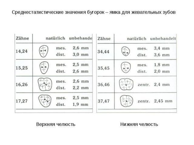 Среднестатистические значения бугорок – ямка для жевательных зубов Среднестатистические значения бугорок – ямка для жевательных зубов Верхняя челюсть Нижняя челюсть