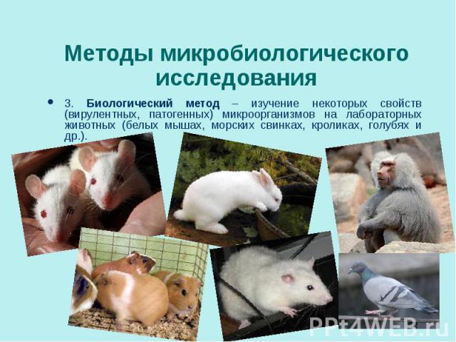 3. Биологический метод – изучение некоторых свойств (вирулентных, патогенных) микроорганизмов на лабораторных животных (белых мышах, морских свинках, кроликах, голубях и др.). 3. Биологический метод – изучение некоторых свойств (вирулентных, патоген…