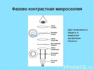 Фазово-контрастная микроскопия