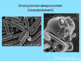 Электронная микроскопия (сканирование)